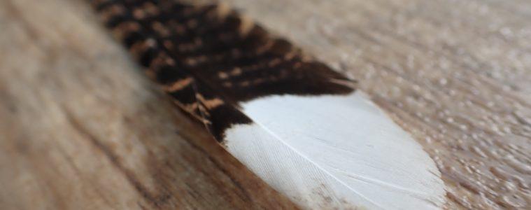 Nightjar feather